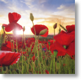 sendacard.co.uk blank card scenery poppy field