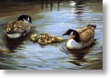 Duck Family, Animal Blank Card