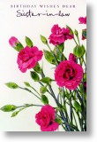 Carnations, Sister-in-law Birthday Card