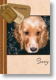 Cocker Spaniel, Sorry Card