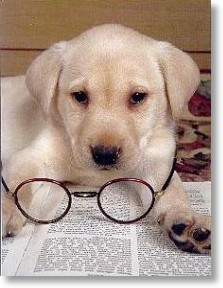 Pup with Spectacles