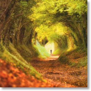 Tree Tunnel, Scenic Blank Card