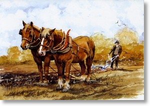 Farmer With Shire Horses, Animal Blank Card