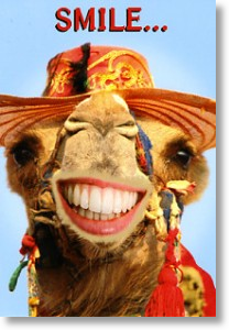 Smiley Camel